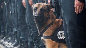 เศร้า! สุนัขตำรวจฝรั่งเศส ถูกบึ้มดับ ขณะล่าคนร้าย