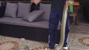 เจ้าของรีสอร์ต โร่แจ้งกู้ภัยช่วย หลังจงอางยักษ์ยาว 5 เมตรบุก!!