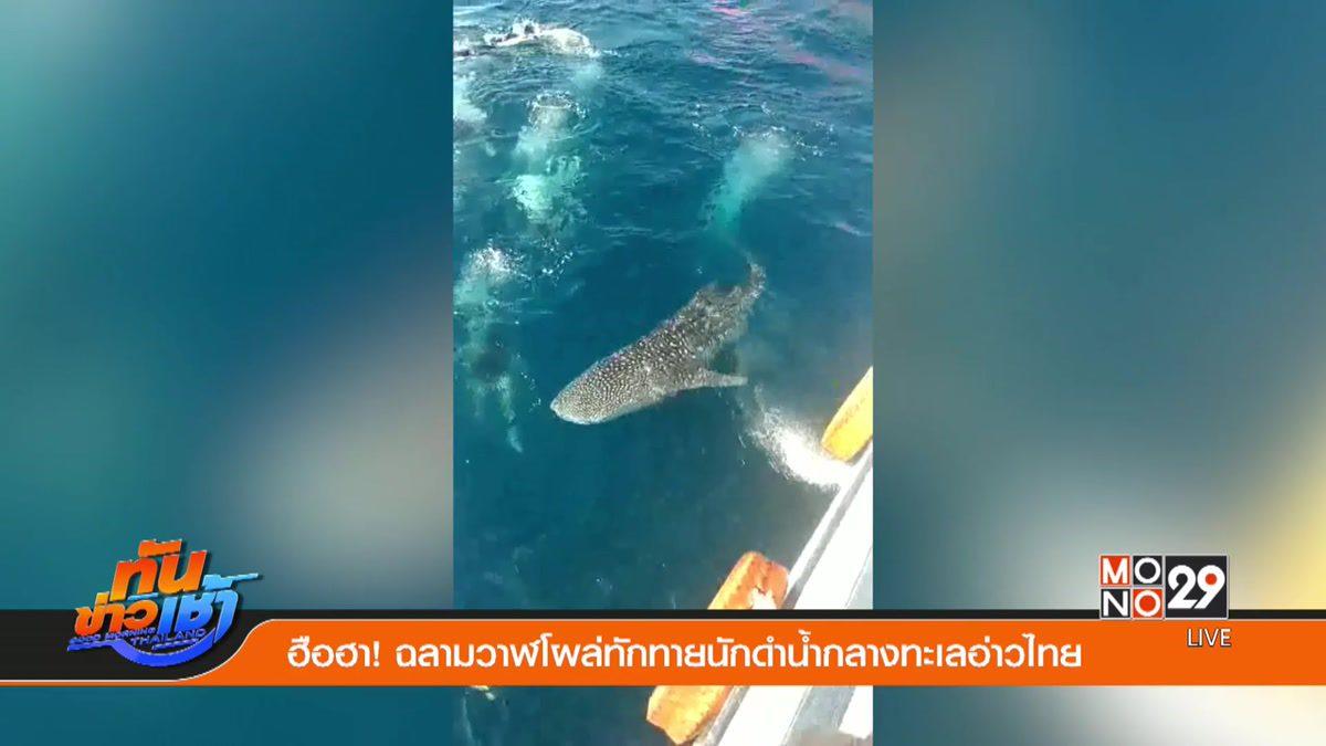 ฮือฮา! ฉลามวาฬโผล่ทักทายนักดำน้ำกลางทะเลอ่าวไทย