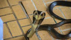 7 วิธีกัน งูเข้าบ้าน รู้ไว้ ปลอดภัยชัวร์