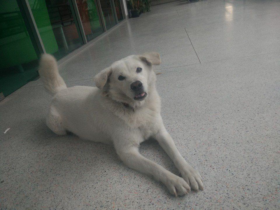 KU SRC DOG Lovers (1)