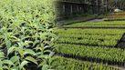 ผู้ว่าฯอัศวิน เผย กทม.เพาะกล้าไม้ 1 ล้านต้น ชวนร่วมปลูกซับมลพิษในอนาคต
