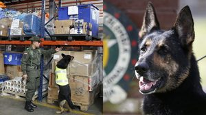 แก๊งค้ายาประกาศ ค่าหัวสุนัขตำรวจ 2.3 ล้าน หลังโดน จับโคเคนกว่า 10 ตัน