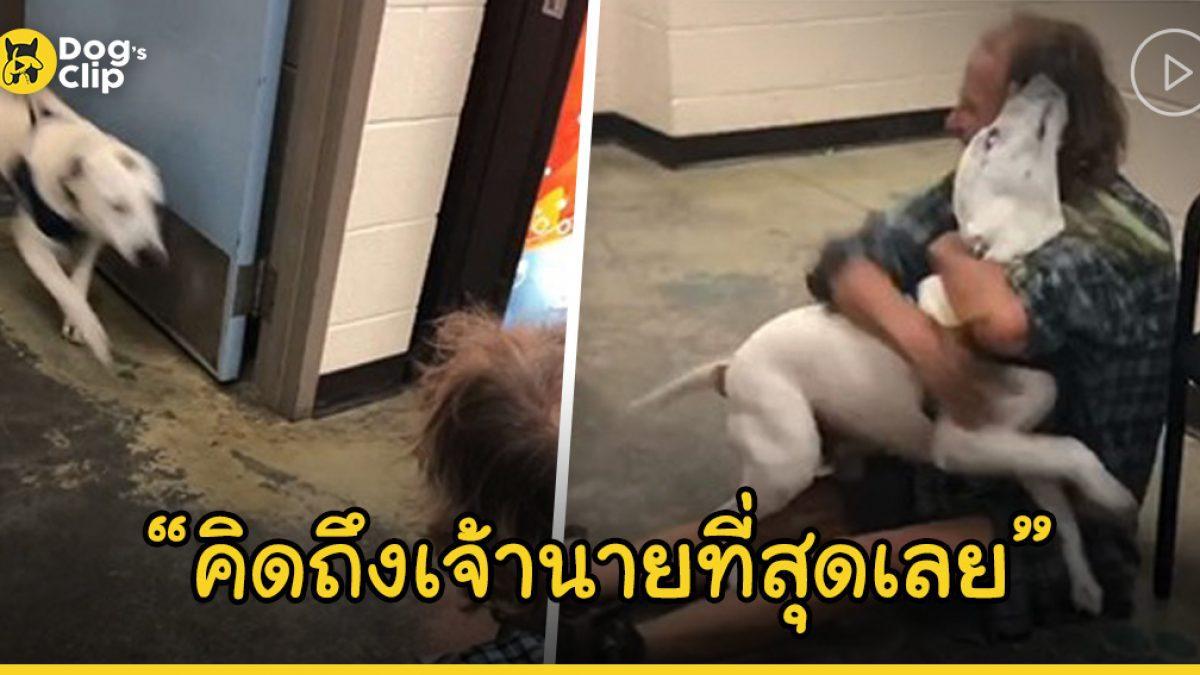ชายไร้บ้านดีใจจนหลั่งน้ำตาหลังได้กลับมาพบหน้าน้องหมาที่เขารักอีกครั้ง