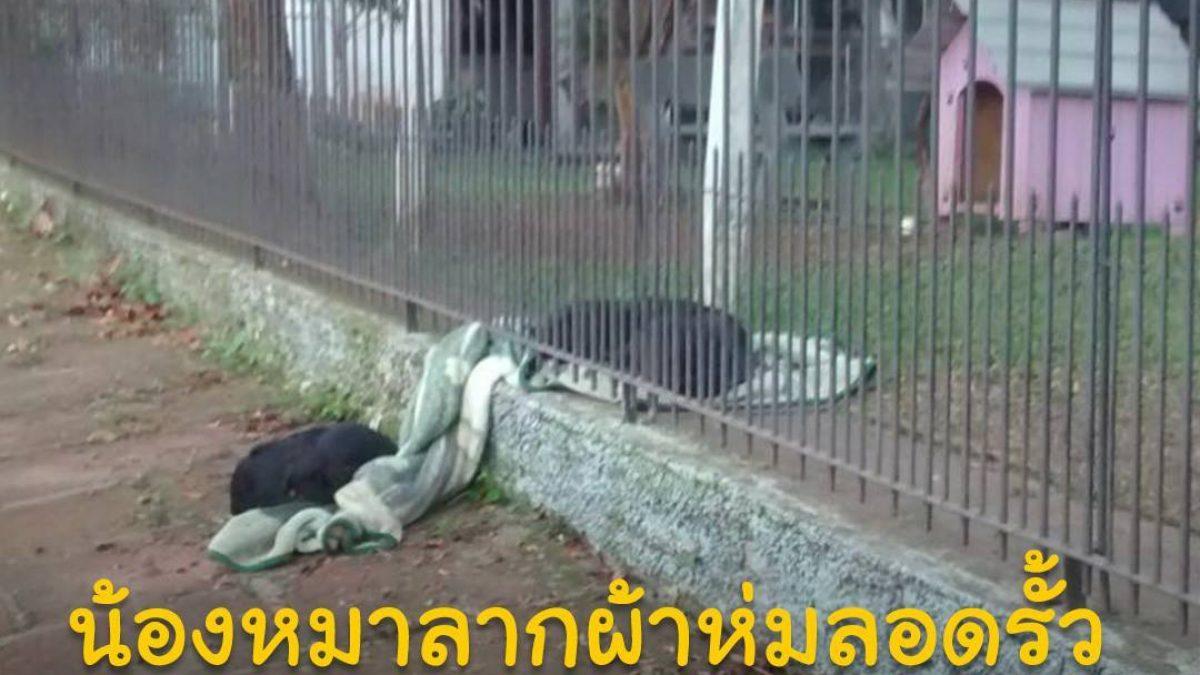 น้องหมาลากผ้าห่มลอดรั้ว เพื่อมาแบ่งให้เพื่อนน้องหมาจรจัดนอนคลายหนาว