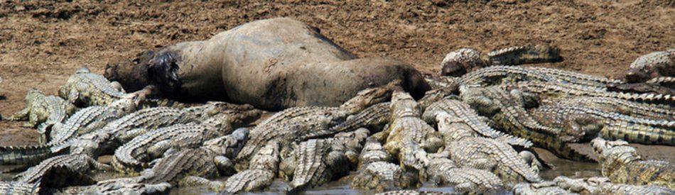 Croc Ganglands สารคดี ดินแดนแห่งจระเข้