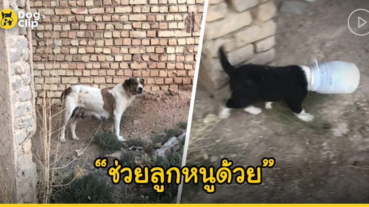 แม่หมาจรจัดวิ่งไปขอความช่วยเหลือกับพลเมืองดี หลังลูกน้อยตัวติดขวดโหลออกมาเองไม่ได้