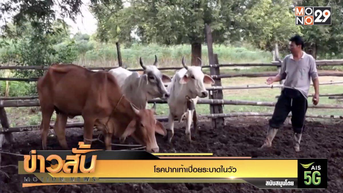 โรคปากเท้าเปื่อยระบาดในวัว