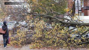 รัฐควิเบก ในแคนาดาพายุถล่มอ่วม ดับ 2 ศพ 400,000 ชีวิตขาดไฟฟ้าใช้