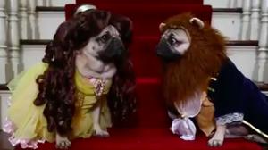 โฉมงามกับเจ้าชายอสูร (หน้าย่น)!? ในคลิปสุดน่ารักต้อนรับ Beauty and the Beast