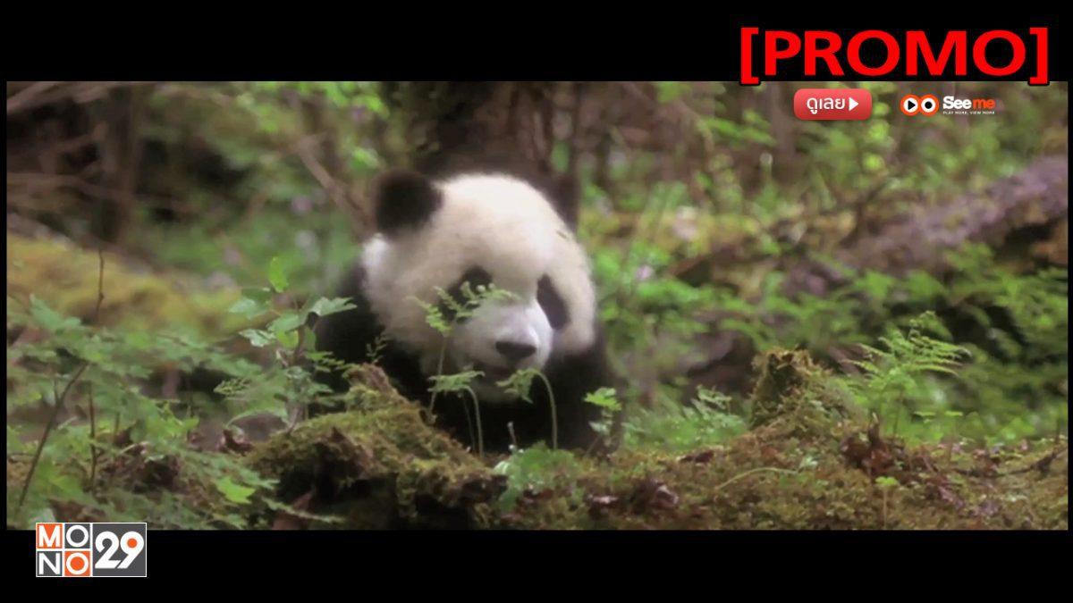The Amazing Panda Adventure แพนด้าน้อยผจญภัยสุดขอบฟ้า [PROMO]