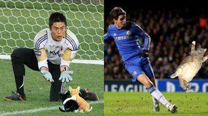 เมื่อ ตัดต่อรูปแมวลงในการแข่งฟุตบอล ความน่ารักและเข้ากันจึงบังเกิด