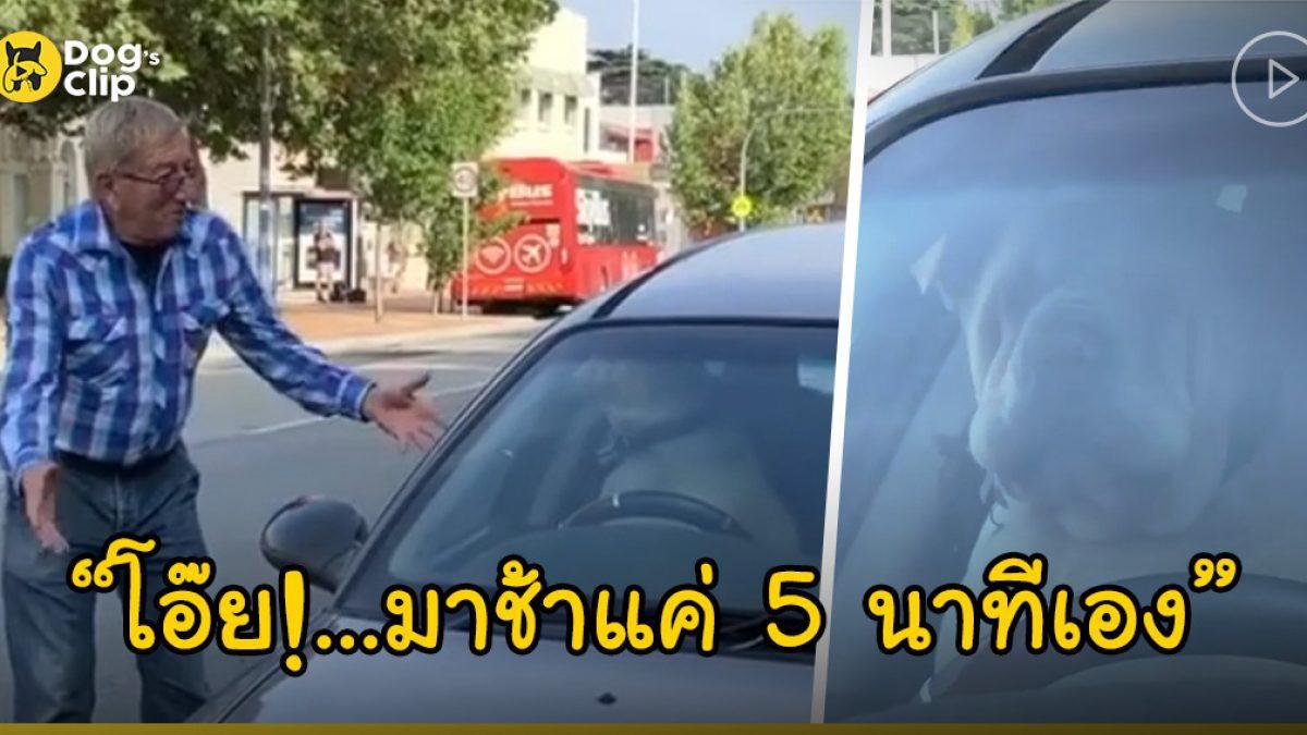 น้องหมาตัวอ้วนไม่พอใจหนัก บีบแตรรัวๆ หลังถูกเจ้านายขังไว้ในรถระหว่างที่ลงไปซื้อของ