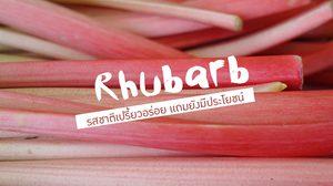 ประโยชน์ของรูบาร์บ ( Rhubarb )