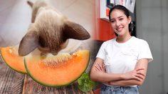 เฌอเบลล์ ลัลณ์ลลิน สงสัย! แมวกินผลไม้ อันตรายรึเปล่า !?