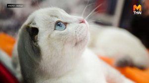 รัสเซียเริ่มผลิตวัคซีนโควิด-19 สำหรับ 'สัตว์' ครั้งแรกในโลก