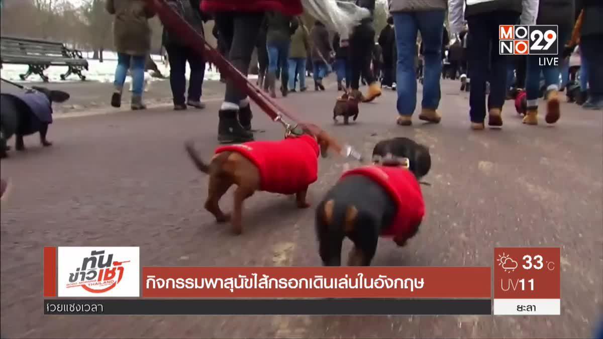 กิจกรรมพาสุนัขไส้กรอกเดินเล่นในอังกฤษ
