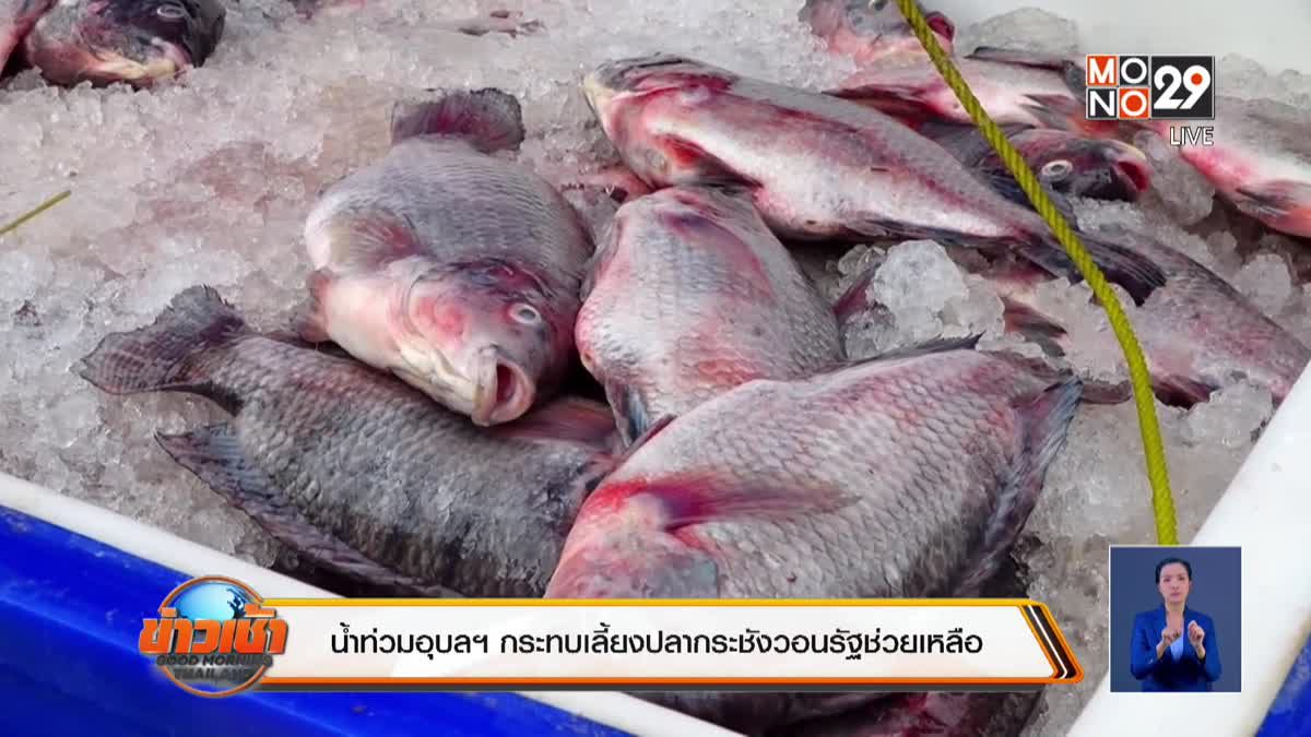 น้ำท่วมอุบลฯ กระทบเลี้ยงปลากระชังวอนรัฐช่วยเหลือ