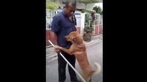 น่ารัก! น้องหมาหนีเที่ยว ถูกเจ้าของแกล้งจะทำโทษ อ้อนหนักเพราะกลัวโดนตี
