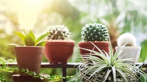 เคล็ดลับ แต่งสวนระเบียงคอนโด เพิ่มพื้นที่สีเขียวให้ดูสดชื่นและมีชีวิตชีวา