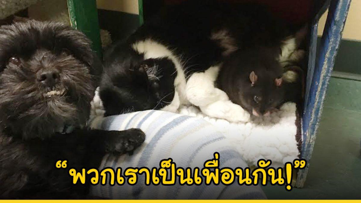 มิตรภาพที่น่าเหลือเชื่อ! น้องหมา แมวและหนู เป็นเพื่อนรักกันและยังคงกอดกันแน่นในวันที่ต้องไร้นายรักรอคอยบ้านหลังใหม่ในศูนย์พักพิง