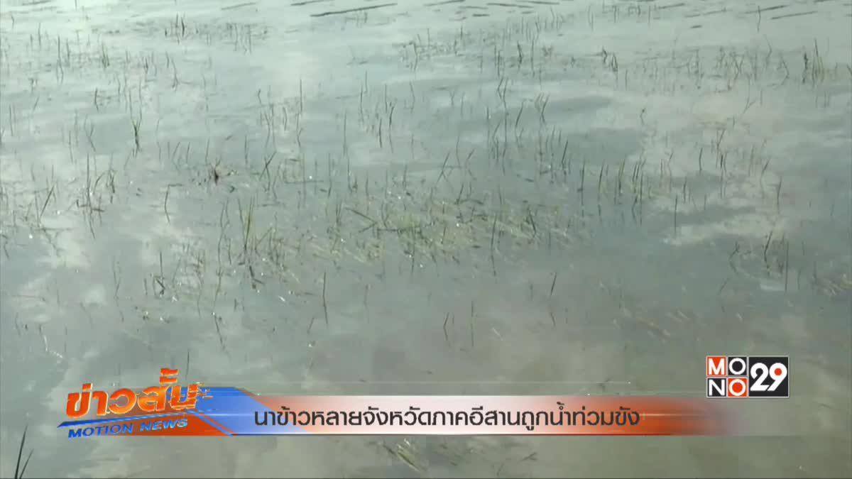 นาข้าวหลายจังหวัดภาคอีสานถูกน้ำท่วมขัง