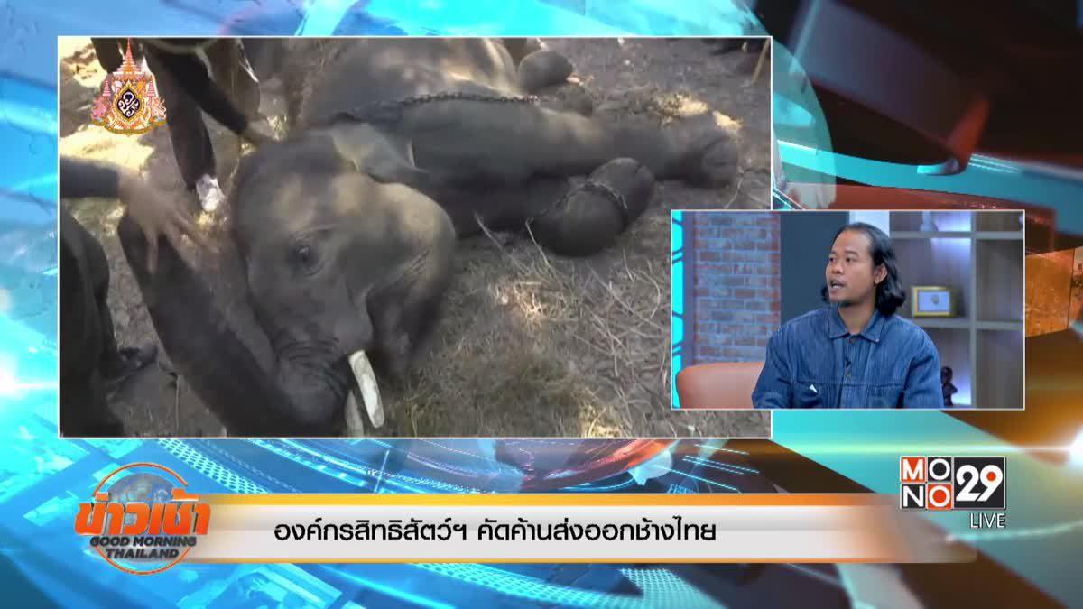 องค์กรสิทธิสัตว์ฯ คัดค้านส่งออกช้างไทย
