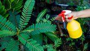 สูตรทำปุ๋ยหมักเกษตรอินทรีย์ บำรุงดินแบบปลอดสารพิษ เร่งการเจริญเติบโตของพืชใบ