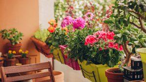 4 ดอกไม้ปลูกระเบียง เติมความสดชื่นให้ห้องดูสดใสยิ่งขึ้น