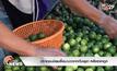 ประชาชนนิยมซื้อมะนาวจากกัมพูชา หลังราคาถูก