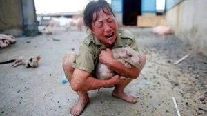 ปริ่มขาดใจ สาวจีนร้องไห้หนักมาก หมูตายเกือบยกเล้าจากน้ำท่วม