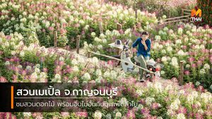 สวนเมเปิ้ล จ.กาญจนบุรี ชมสวนดอกไม้ พร้อมอิ่มไม่อั้นกับบุฟเฟ่ต์ลำไย