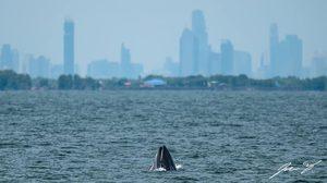 ดร.ธรณ์ ส่งต่อภาพ วาฬบรูด้า โผล่แม่น้ำเจ้าพระยา แนะคนไทยรักษ์สิ่งแวดล้อม