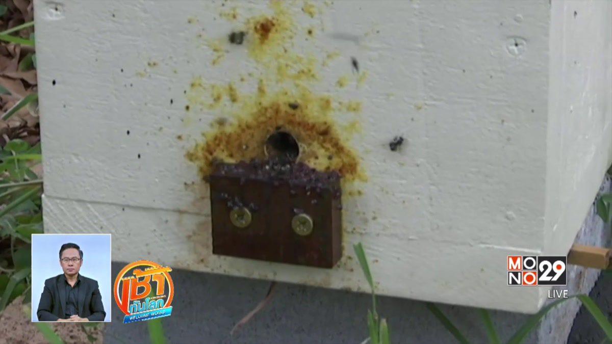 """ดัดแปลงโทรทัศน์เก่าเป็น """"รังผึ้ง"""""""