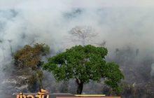 บราซิลส่งทหารดับไฟป่าอะเมซอน