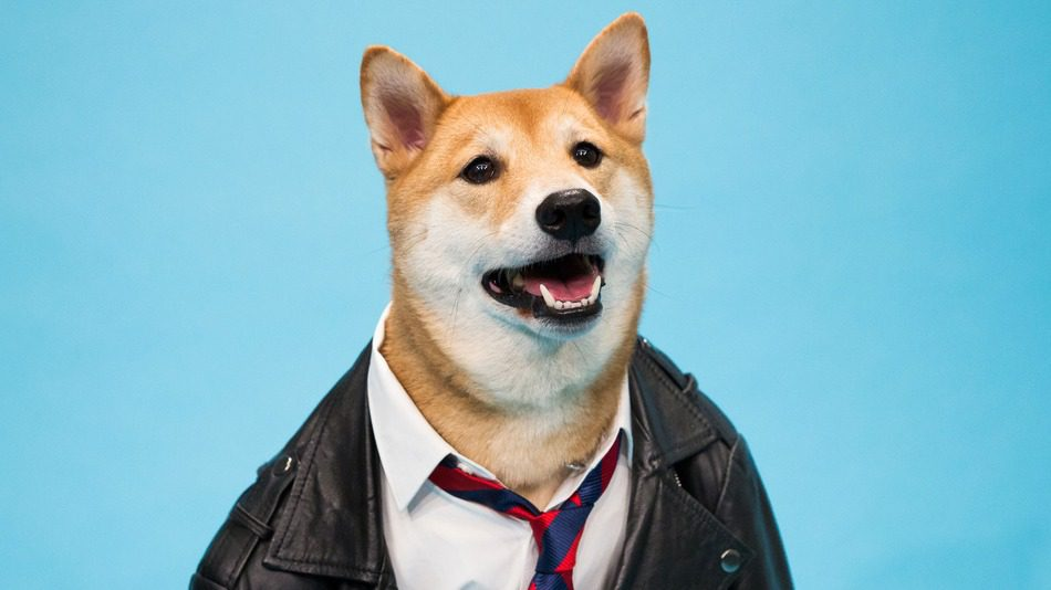 instagram fashionable_dogs_menswear_dog