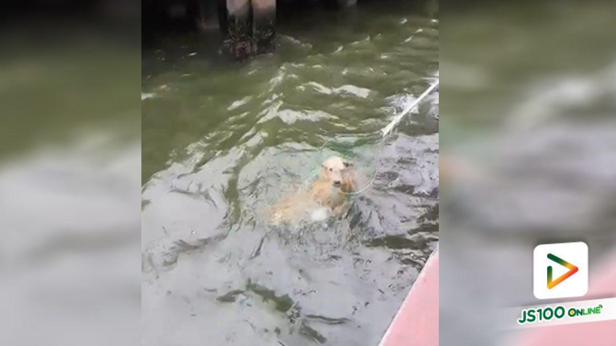 น้ำใจของคนในเรือโดยสารทั้งลำ สละเวลาลอยลำช่วยเหลือสุนัขตกคลองแสนแสบจนรอด (23-06-2561)