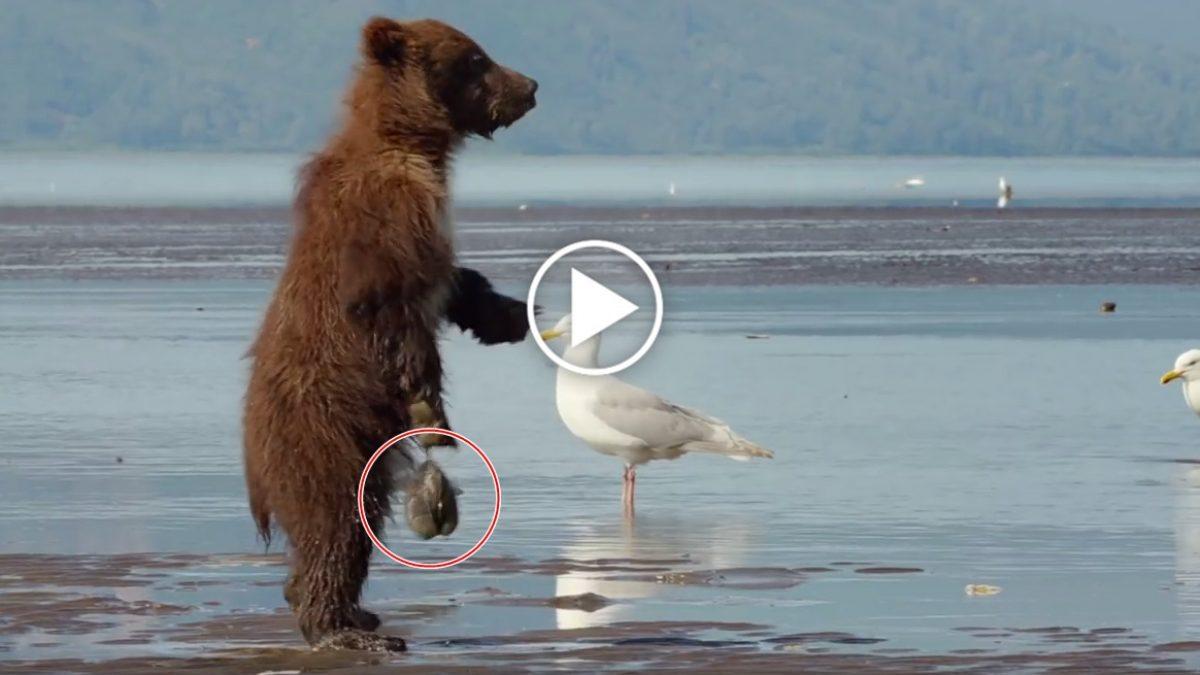เห็นตัวเล็กๆ ไม่นึกว่าจะมีพิษสงได้ขนาดนี้ น้องหมี ทำไงละทีเนี้ย สะบัดเท่าไหร่ก็ไม่หลุด?