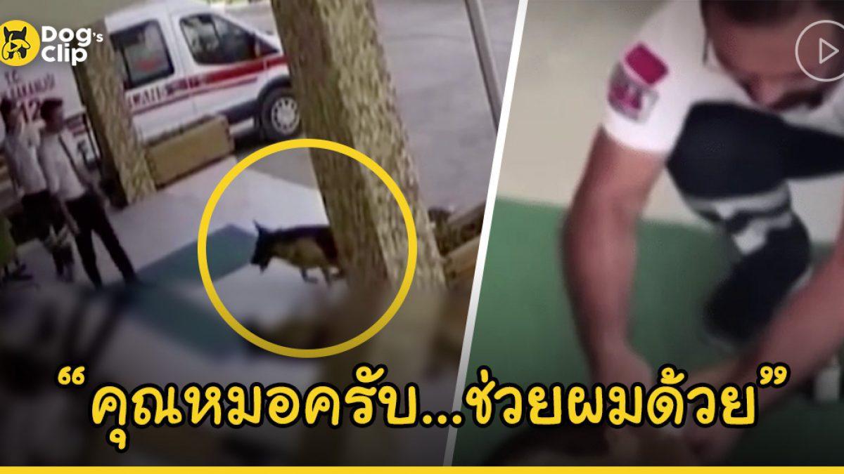 น้องหมาบาดเจ็บหลังจากถูกขโมยเดินไปโรงพยาบาลเอง เพื่อขอให้คุณหมอช่วยรักษา