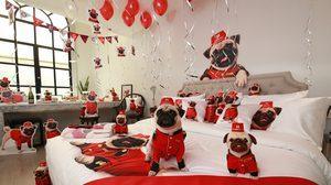 Hotels.com เปิดตัวแบรนด์แอมบาสเดอร์สุนัขพันธุ์ปั๊กในไทย