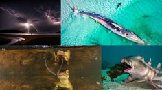 ภาพถ่ายแห่งปี 2019 จาก Australian Geographic ธรรมชาติที่ถ่ายทอดได้งดงามเกินคำบรรยาย