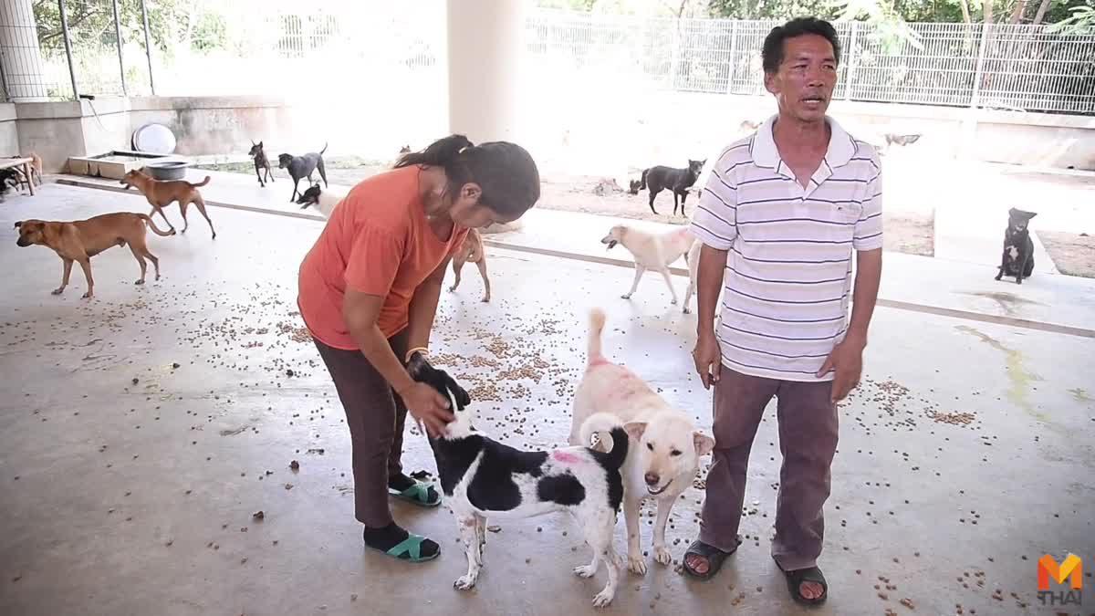เผยชีวิตสุนัขจรจัดจากซอยชินเขต หลังย้ายไปบ้านใหม่ที่ศูนย์พักพิงอุทัยธานี