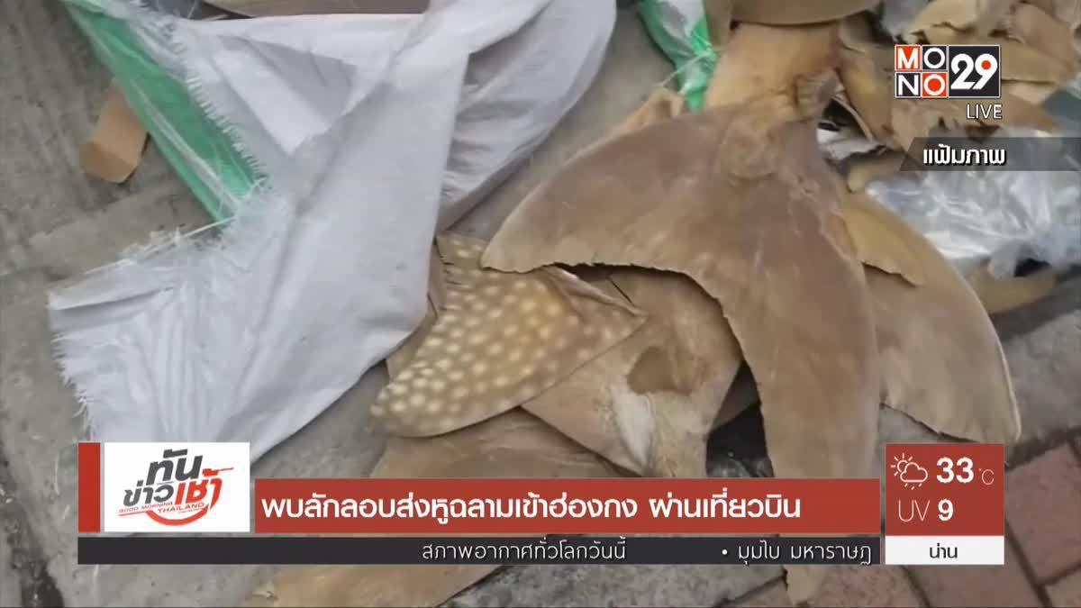 พบลักลอบส่งหูฉลามเข้าฮ่องกง ผ่านเที่ยวบิน