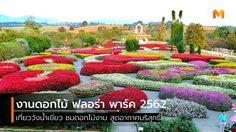 เที่ยววังน้ำเขียว ชมดอกไม้งาม ที่ Flora Park (ฟลอร่าพาร์ค) เปิดสวนวันแรก 1 พ.ย. 62