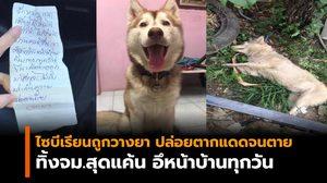 เจ้าของใจสลาย! สุนัขไซบีเรียนถูกวางยา-ปล่อยตากแดดจนตาย ทิ้งจม.สุดแค้นอึหน้าบ้าน