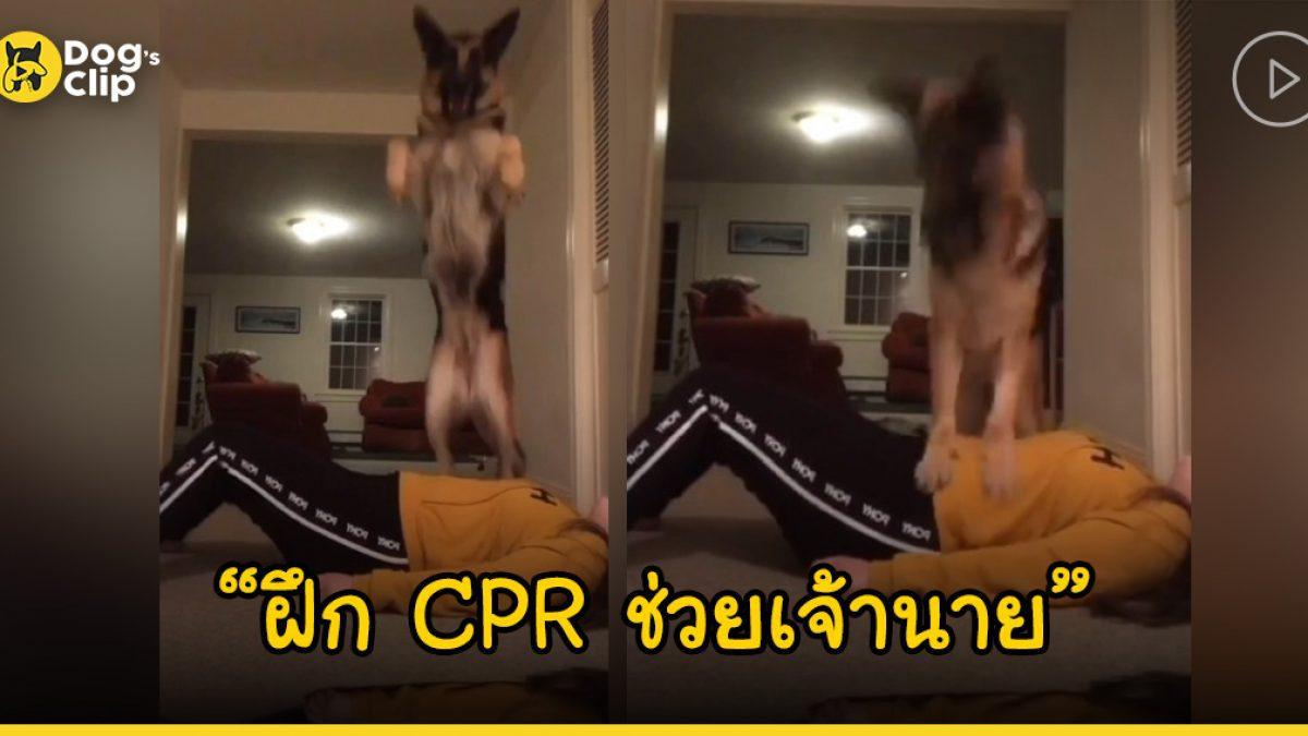 คลิปน่ารักๆ เมื่อน้องหมาบริการฝึกทำ CPR ให้เจ้านาย