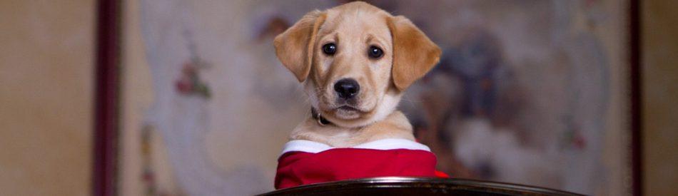 The Dog Who Saved the Holidays บิ๊กโฮ่ง ซูเปอร์หมา ป่วนฮอลิเดย์