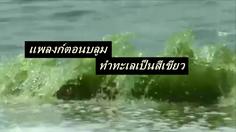'แพลงก์ตอนบลูม' ทำทะเลบางแสนเป็นสีเขียว แนะเลี่ยงลงเล่นน้ำ