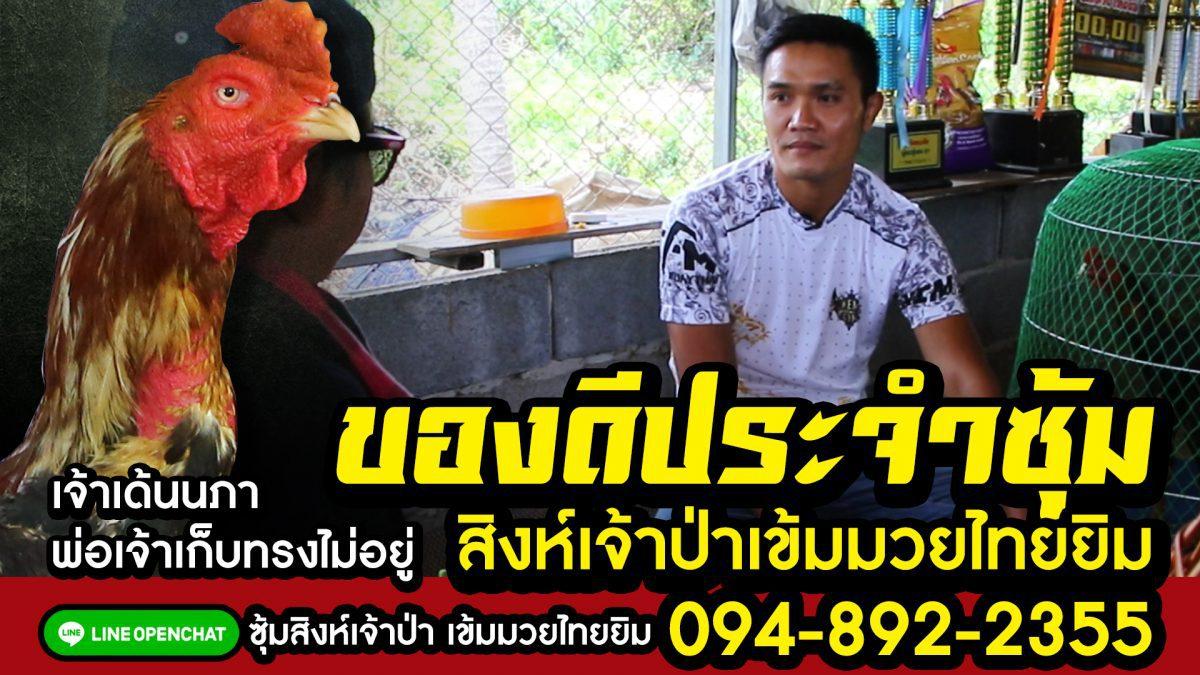 ชุดเลี้ยงชุดชน สิงห์เจ้าป่าเข้มมวยไทยยิม