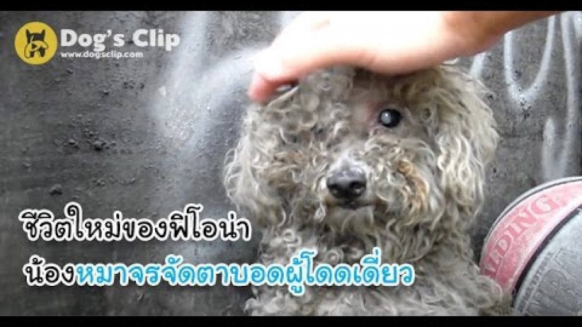 ชีวิตใหม่ของฟิโอน่า น้องหมาจรจัดตาบอดผู้โดดเดี่ยว